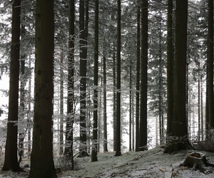 forest, frost, and nature image