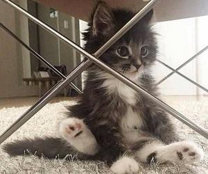 kitten, kitty, and cute image