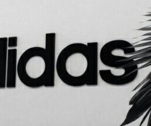 grey, adidas, and black image