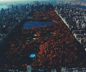 nature, love, and park image