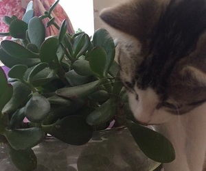 cat, plant, and cute image