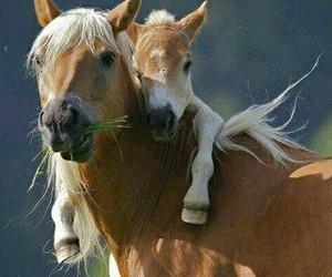 horse, Animales, and caballo image