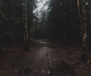 dark, fall, and forest image