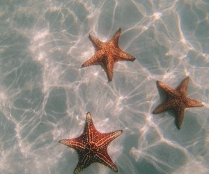 blue, ocean, and starfish image