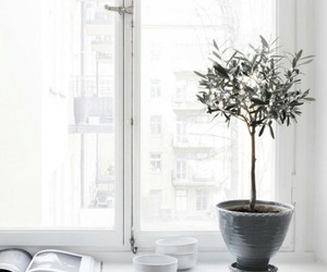 plants, white, and window image
