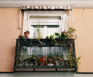flowers, plants, and window image