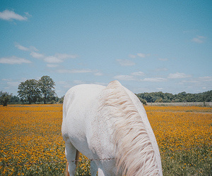 flowers, horse, and sky image