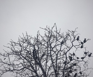 birds, tree, and grey image