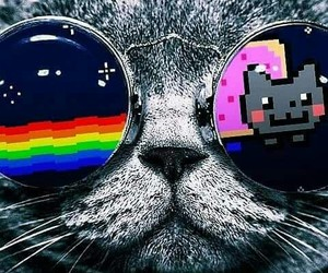 amazing, game, and cat image