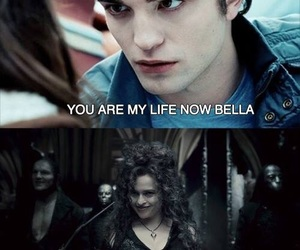 harry potter, bella, and funny image