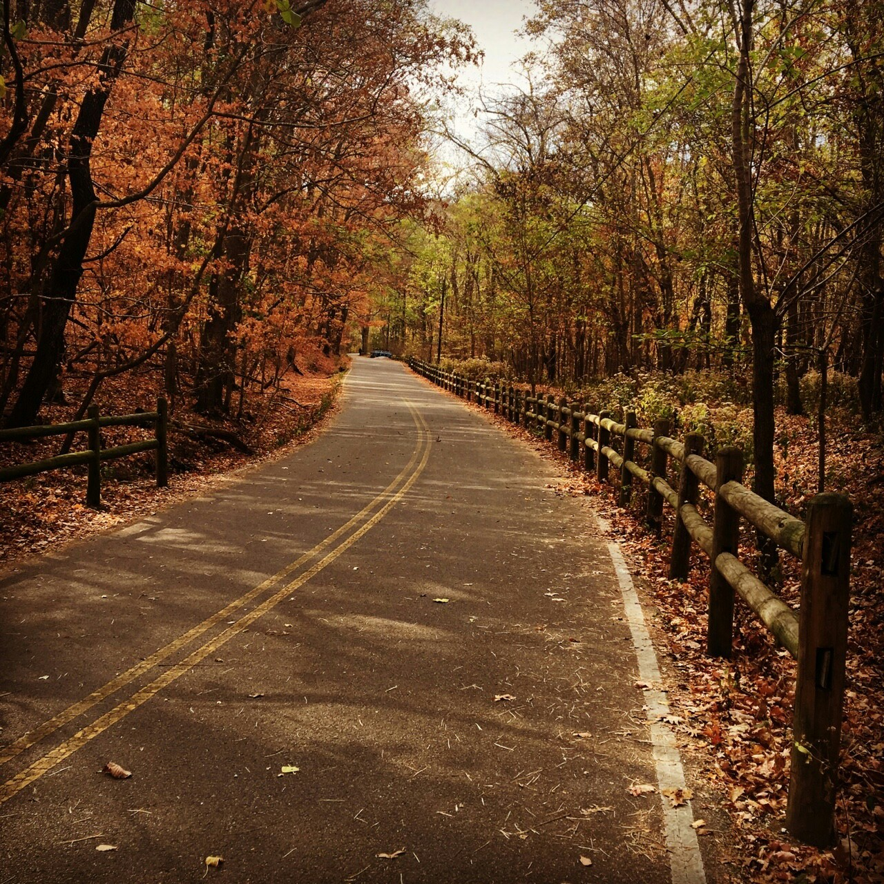 fall, roads, and trees image