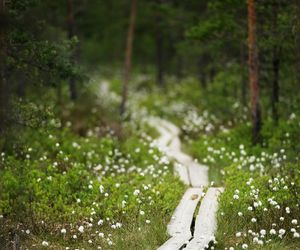 finland, forest, and nature image