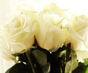 flowers, white, and romantic image