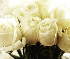 flowers, relationships, and white image