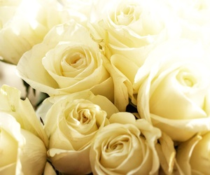 flowers, Relationship, and white image