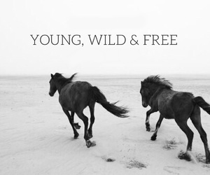 horse, free, and wild image