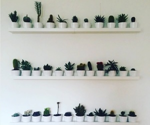 cacti, flowers, and wall image