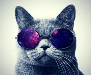 cat, galaxy, and glasses image