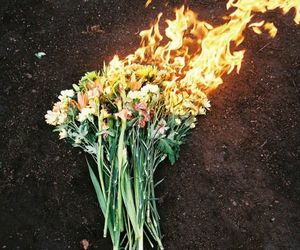 flowers, fire, and burn image