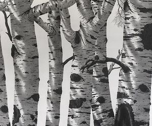 birch, landscape, and pencil drawing image