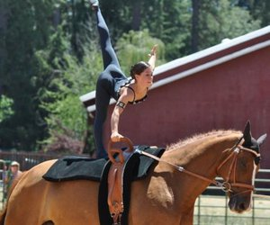 equestrian vaulting image