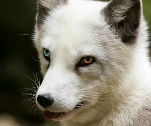 blue, eyes, and brown image