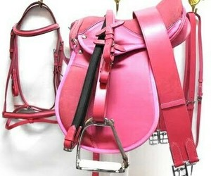 equestrian, hot pink, and pink image