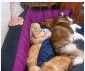 dog, funny, and me image