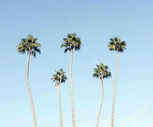 blue, palms, and sky image