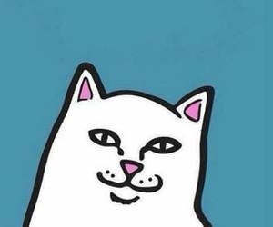 cat, wallpaper, and lockscreen image