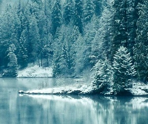 snow, winter, and evergreen image
