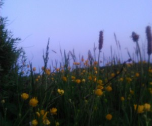 buttercups, flowers, and memories image