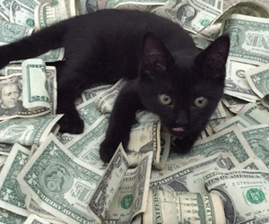 money, cat, and black image