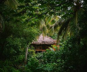 nature and tropical image