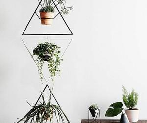 aesthetics, cactus, and cacti image