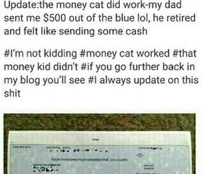 cat, funny, and money cat image