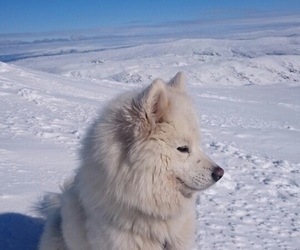 dog, nature, and norway image