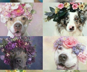 dog, flowers, and flores image