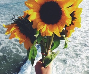 flowers, sunflower, and beach image