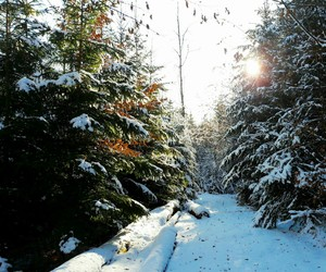 christmas, cold, and forest image
