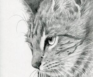 drawing, pencil drawing, and sketch image