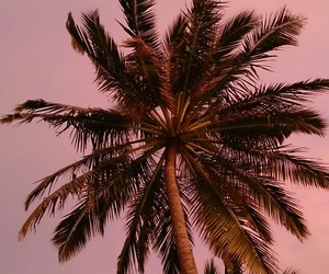 palm trees, pink, and sunset image