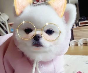 dog, animal, and pink image