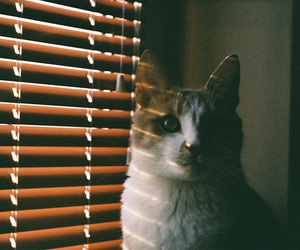 35mm, analog, and cat image