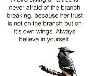 quotes, bird, and believe image