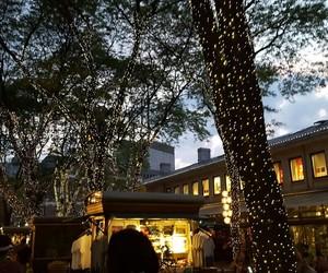 boston and lights image