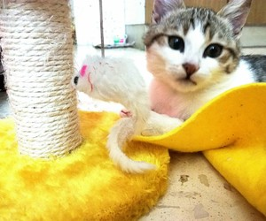 adorable, cat, and yellow image