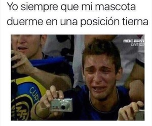 memes en español, mascóta, and chistoso image