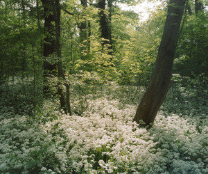nature, forest, and flowers image