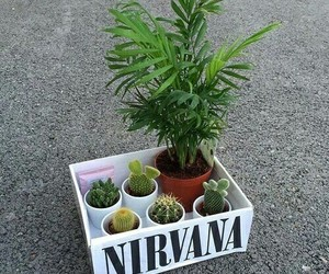 cactus, nirvana, and plants image